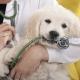 Fórmate como médico veterinario con los mejores